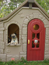 Thumbnail photo of a pug named 'Rose in the plastic playhouse' - PugRodeo.com