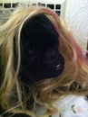 Thumbnail photo of a pug named 'Ms. Suki' - PugRodeo.com