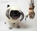 Thumbnail photo of a pug named 'Hoth Wampug Attack!' - PugRodeo.com