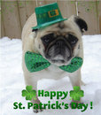 Thumbnail photo of a pug named 'St. Patrick's Day Pug Dog' - PugRodeo.com