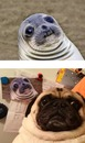 Thumbnail photo of a pug named 'You know what they say about imitation...' - PugRodeo.com