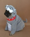 Thumbnail photo of a pug named 'Our Pug Boo The Bulldog' - PugRodeo.com