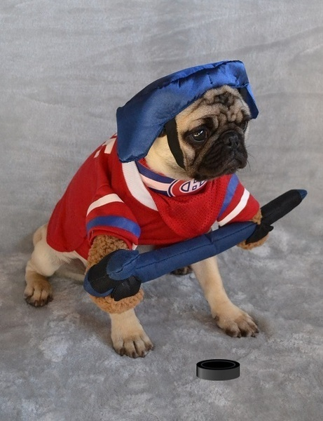 Pug named 'Boo The Hockey Player Pug' - PugRodeo.com