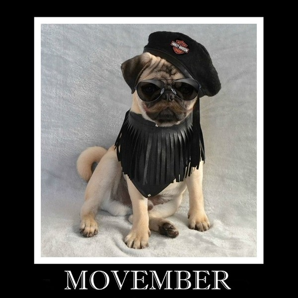 Pug named 'Movember Grow Your Mo! Boo The Pug' - PugRodeo.com