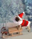 Thumbnail photo of a pug named 'Christmas Santa Pug Puppy' - PugRodeo.com