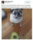 Thumbnail photo of a pug named 'Bizzy is sad...' - PugRodeo.com