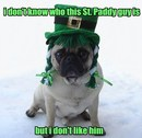 Thumbnail photo of a pug named 'Funny Pug St. Patrick's Day' - PugRodeo.com