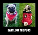 Thumbnail photo of a pug named 'Montreal Canadiens vs Ottawa Senators Battle of the Pugs' - PugRodeo.com